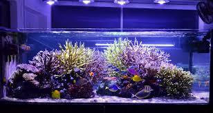 Oświetlenie Led Do Akwarium